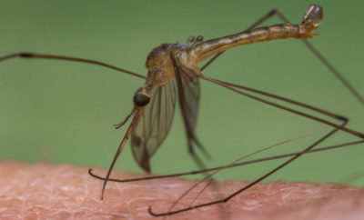 West Nile Virus montgomery county
