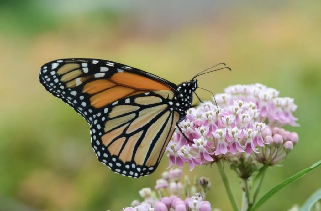 The Woodlands Township introduces Plant for Pollinators program
