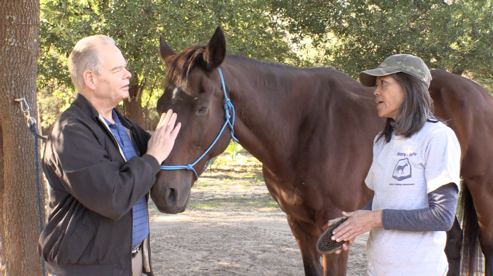 Henry's Home Horse & Human Sanctuary