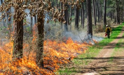 prescribed burning operations on the W.G. Jones State Forest on January 14 – 15, 2021.