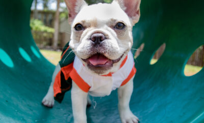 """Woodforest is inviting dog owners and their pups to """"Pawtraits"""" For a Cause 10 a.m. to 2 p.m. Saturday, June 26, at Christine Allen Nature Park, 5831 Woodforest Parkway South. Cost for the professional dog photos is a can or bag of dog food to be donated to the Montgomery County Animal Shelter."""
